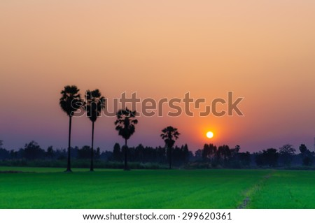 Blurred of Orange Sky with sunset over Green rice yard with shadow and fog - stock photo