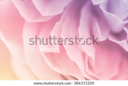Blurred of roses in soft pastel color and blur style for background