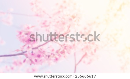 blurred of wild Himalayan Cherry (Prunus cerasoides) blooming for background with pastel vintage retro style. - stock photo