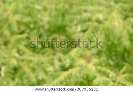 Blurred photo of a green foliage