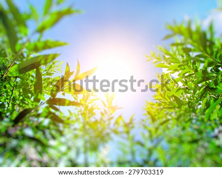 Blurred photo of Green Leafs in the summer sunny day - stock photo