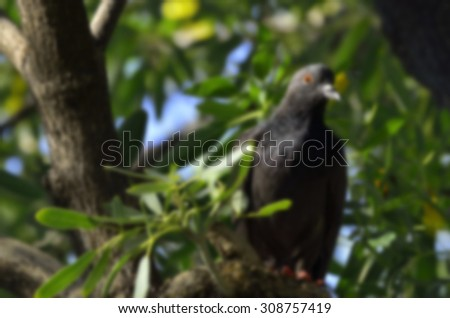 BLURRED PIGEON ON THE TREE