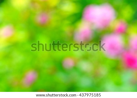 Blurred rose bush in the garden on a bright sunny day. Background. Summer colors. Sunny mood. - stock photo