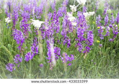 blurred summer meadow background