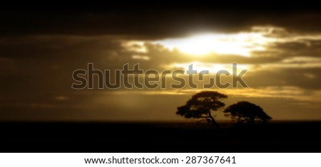 Blurred sunset on the African savanna with trees and golden cloudy sky, for travel backgrounds           - stock photo