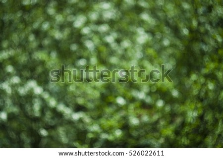 blurred tree background, abstract focus