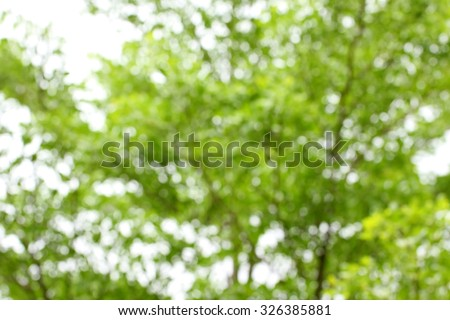 Blurred tree branch. Abstract spring background. Green natural background of out of focus forest or bokeh. - stock photo