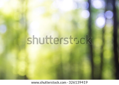 Blurred trees in the sunny day. Forest background - stock photo