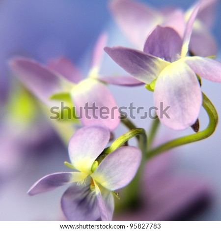 blurred violet - stock photo
