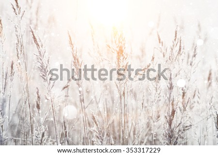blurred winter background, dry grass snowflakes - stock photo