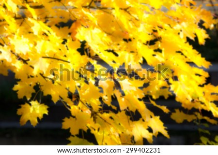 Blurred yellow leaves in fall, autumn on a sunny day in front of darkness, background - stock photo