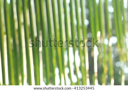 Blurry : coconut leaf or palm leaf on a green background scene, popular