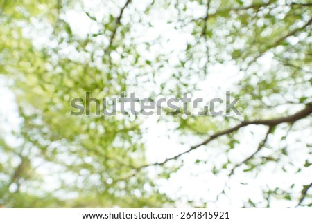 blurry green leaves on tree as abstract background - stock photo
