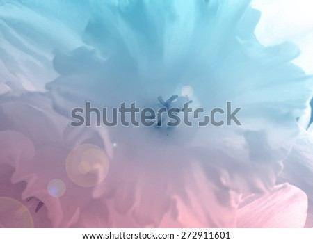 blurry narcissus flower close up with colorful pink and blue gradient overlay filter and sun ray effects - stock photo