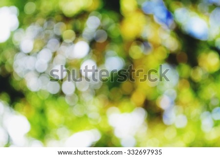 Blurry natural green light  beautiful background and texture. - stock photo