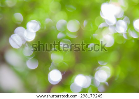 Blurry Soft Leaf Backgrounds  - stock photo