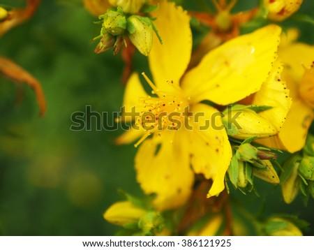 Blurry spring background. Defocused spring flowers - stock photo