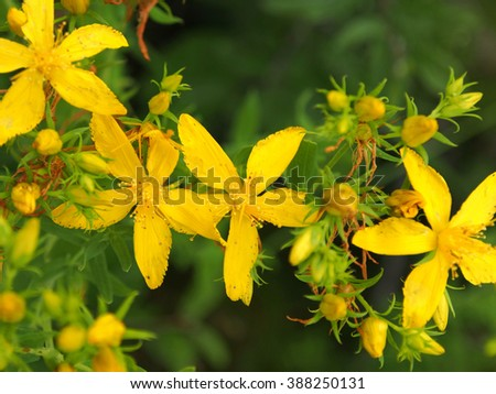 Blurry spring background with yellow flowers