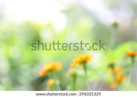 blurry Zinnia flower field background   - stock photo