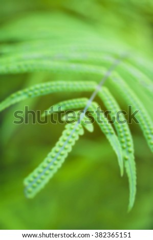 blury, defocused background image of green fern leaf with spores in Botanical Garden of Puerto De La Crus, Tenerife, Canary islands, Spain - stock photo