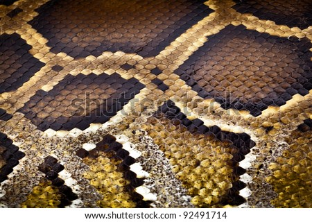 boa or python snake pattern skin from alive body in Thailand - stock photo