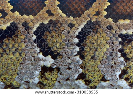 Boa snake skin by authentic pattern and mark of age - stock photo