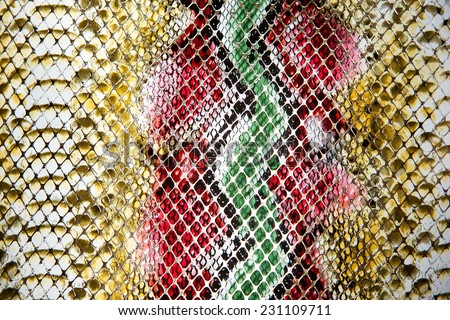 Boa snakeskin bleaching dyeing multicolored. - stock photo