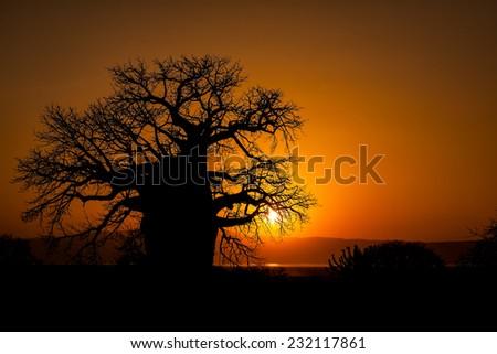 Boabab at sunset. Eyasi Lake, Tanzania. - stock photo
