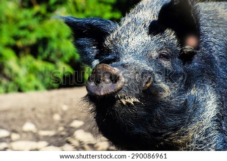 boar in the forest - stock photo