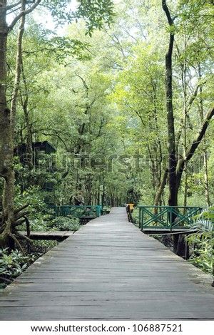 board paths in mangrove forest conservation area