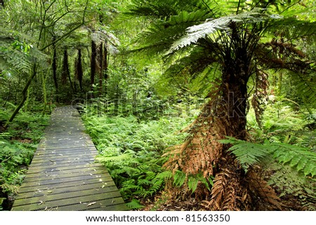 Boardwalk in a lush green tropical forest scene