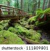 boardwalk in forest - stock photo