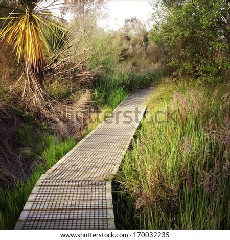 Boardwalk in New Zealand landscape - stock photo
