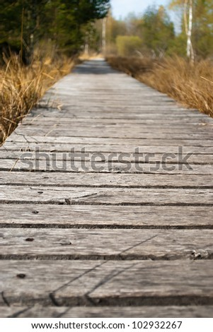 Boardwalk in the south german forest