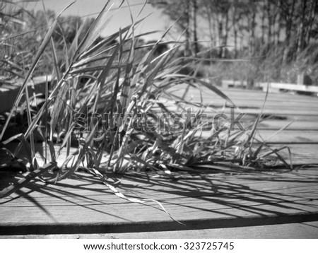 Boardwalk in the Wetland - stock photo