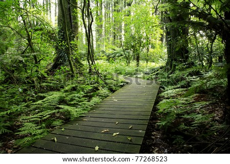 Boardwalk in tropical forest - stock photo
