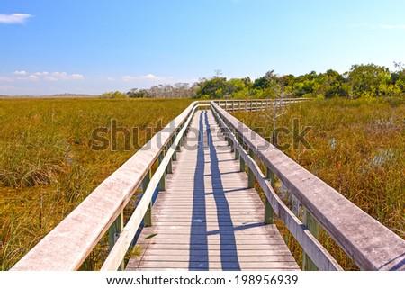 Boardwalk Through a Wetland in the Everglades - stock photo