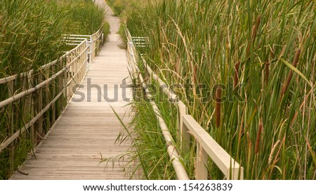 Boardwalk through cattail marsh - stock photo
