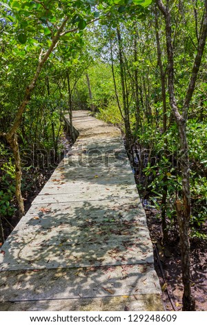 Boardwalk through the mangroves