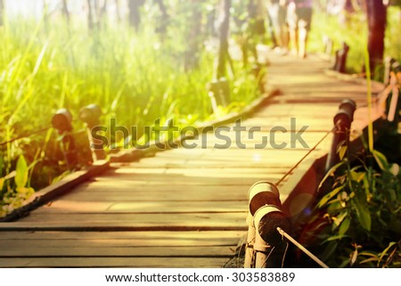Boardwalk winding through forest - stock photo