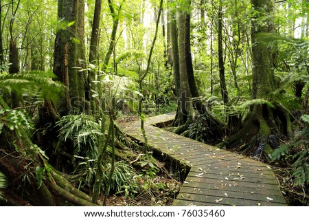 Boardwalk winding through forest - stock photo