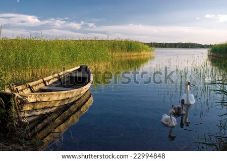 Boat and swans at the lake near the shore - stock photo