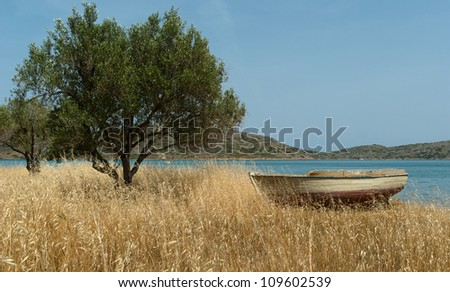 Boat on Mediterranean shore near olive tree. Background. Greece.