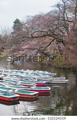 Boat on the Inokashira Pond with Cherry blossoms flower.