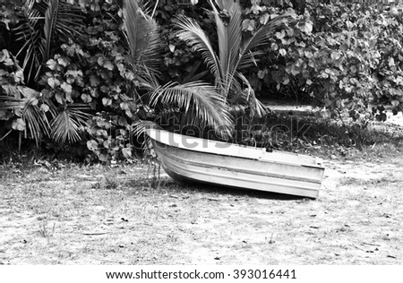 Boat standing,isle of pines,boats on sand,small boat,black and white boat picture,palm trees,boat near ocean,white boat,small boat,boats in nature,ocean ,sea ,dream boat ,vacation,holiday,boat forest - stock photo