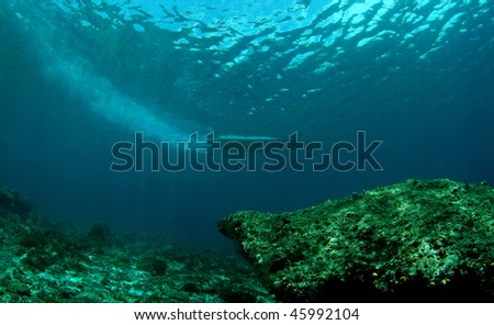 boat trail from underwater view at Hukurila island, Ambon, Indonesia