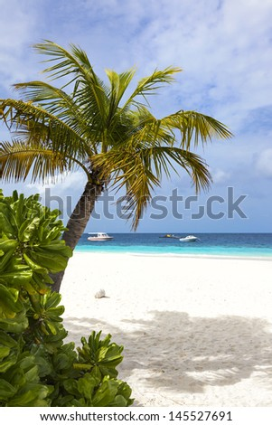 Boats anchoring on tropical beach. View next to palm tree with focus on palm tree.