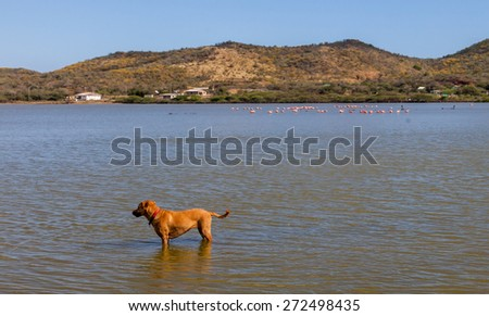 Boca Sami and St Michel Curacao a tropical island in the Caribbean - stock photo