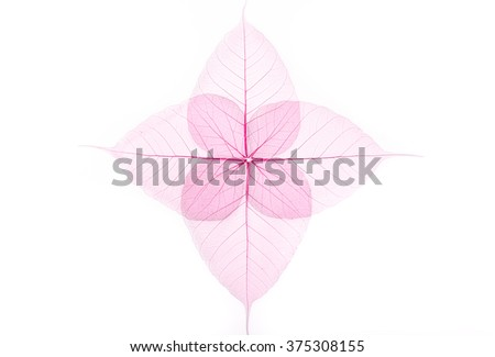 Bodhi leaves in pink colour on white background