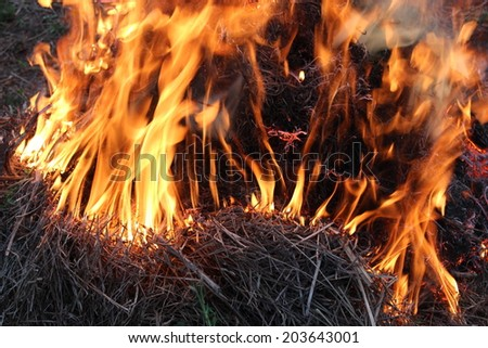 body of flame inflaming in a forest
